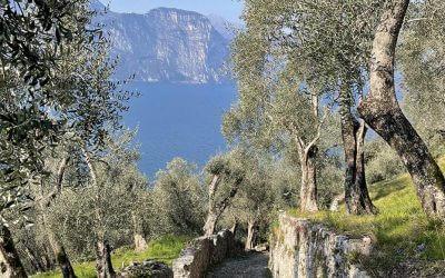 Olio di oliva extravergine Garda DOP: qualità e garanzia non a caso